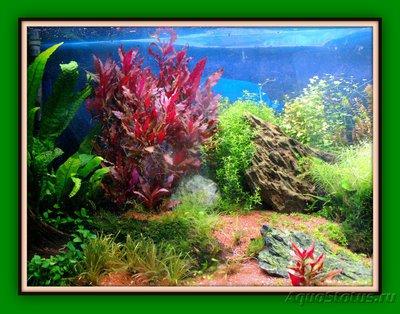 Фото аквариумов объемом от 101 до 250 литров - PICT0134.JPG