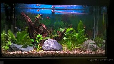 Первый аквариум 100 литров Евгений Аралов  - 11.jpg