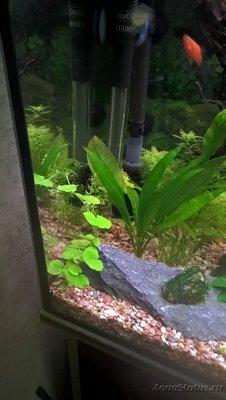 Первый аквариум 100 литров Евгений Аралов  - 22.jpg