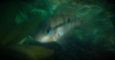 Помогите опознать рыбку опознание рыб  - рыба.jpg