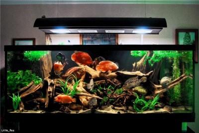 Коряга в аквариуме - b5b7df7981d7.jpg