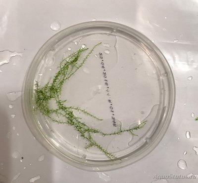 Аквариумные растения - опознание растений. - fullsizeoutput_23cc.jpeg