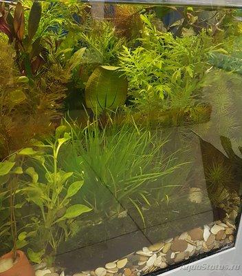 Аквариумные растения - опознание растений. - 20161020_201041.jpg