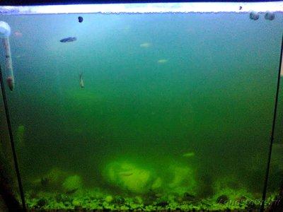 Мутная вода в аквариуме, муть в аквариуме - Фото0212.jpg
