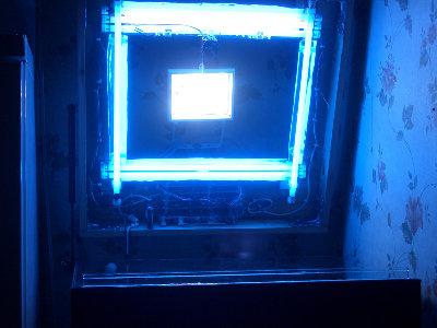Мой морской аквариум 250 литров Сергей  - 2.JPG
