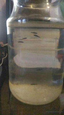 Мутная вода в аквариуме, муть в аквариуме - photo_2016-11-03_14-57-36.jpg