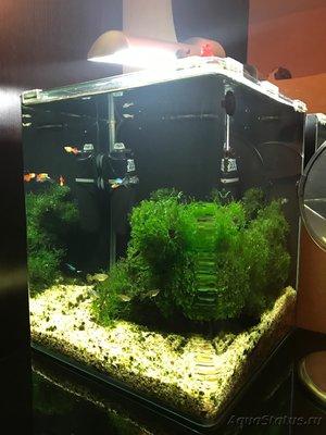 Мой нано-аквариум 30 литров kaiassowa  - IMG_3699.JPG