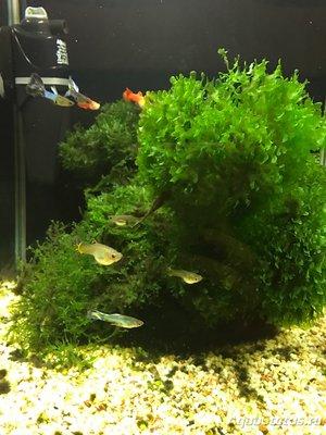 Мой нано-аквариум 30 литров kaiassowa  - IMG_3700.JPG