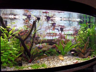 Фото аквариумов объемом от 101 до 250 литров - SDC13400.JPG