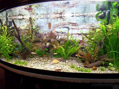 Фото аквариумов объемом от 101 до 250 литров - SDC13403.JPG