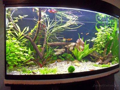 Фото аквариумов объемом от 101 до 250 литров - SDC13424.JPG