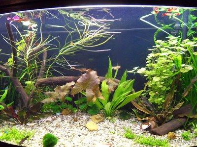 Фото аквариумов объемом от 101 до 250 литров - SDC13427.JPG