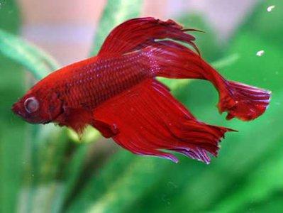 Болезни аквариумных рыб - Болезни-рыбок-в-пресноводном-аквариуме.jpg