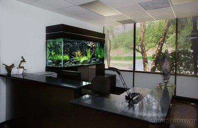 Выбор места для установки аквариума - выбор-места-для-аквариума.jpg