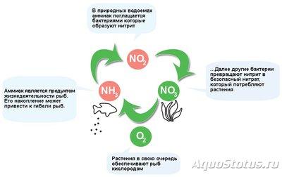 Азотный цикл в аквариуме - Азотный-цикл-в-аквариуме.jpg