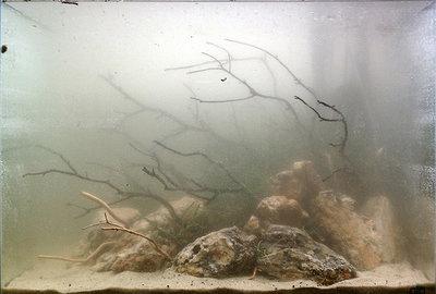 Белесая муть в аквариуме - Белесая-муть-в-аквариуме.jpg