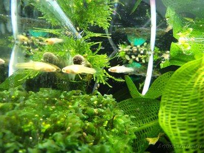Помогите опознать рыбку опознание рыб  - DSC05697.JPG