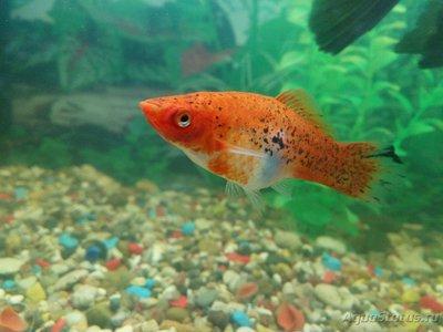 Помогите опознать рыбку опознание рыб  - IMG_20161127_220332.jpg