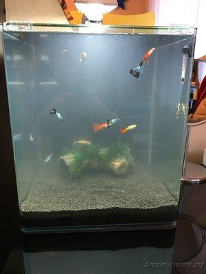 Мой нано-аквариум 30 литров kaiassowa  - IMG_4256.JPG