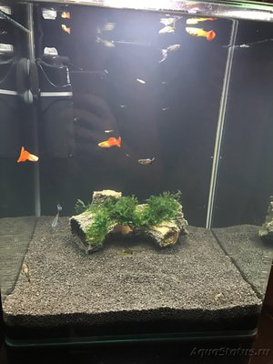 Мой нано-аквариум 30 литров kaiassowa  - IMG_4274.JPG