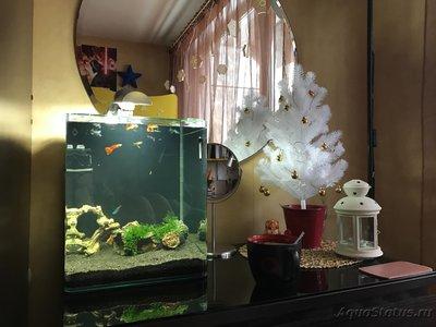 Мой нано-аквариум 30 литров kaiassowa  - IMG_4370.JPG