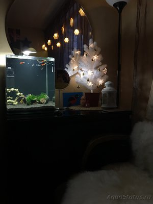 Мой нано-аквариум 30 литров kaiassowa  - IMG_4492.JPG