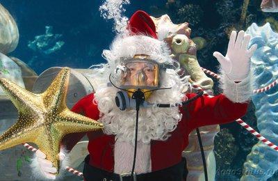 Аквариумный фотоконкурс 7 Новогоднее настроение - обсуждение - SantasWaterWonderland1.jpg