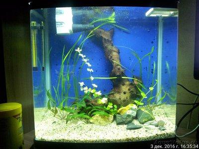 Мой настольный аквариум. Эволюция из 100 в 30 литров neldon  - 20161203_163533_IMG.jpg