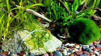 Мой аквариум 60 литров Акварина  - Мох на камне.jpg