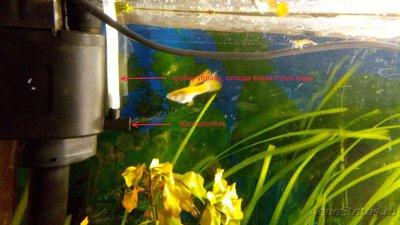 Мой аквариум 60 литров Акварина  - DSC_0081.jpg
