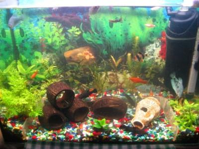 Мой аквариум 80 литров лёва  - IMG_0967.jpg