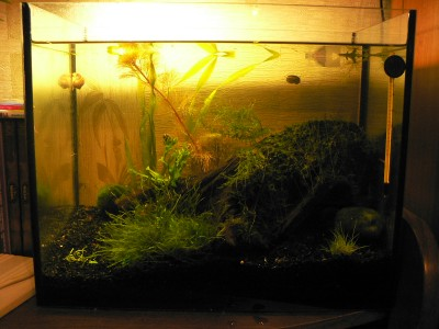 Креветочник - аквариум для креветок - P1080051.JPG