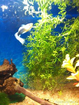 Опознание аквариумных растений - IMG_20161219_180025.jpg