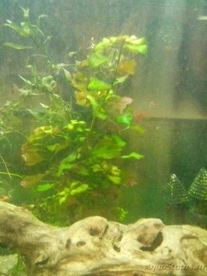 Опознание аквариумных растений - IMG_20161219_184647.jpg