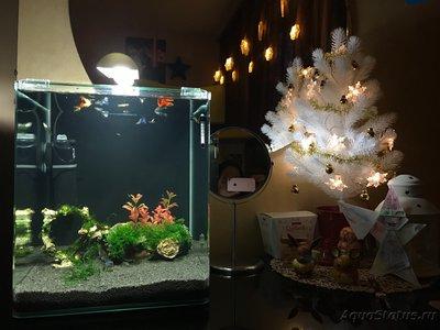 Мой нано-аквариум 30 литров kaiassowa  - IMG_5447.JPG