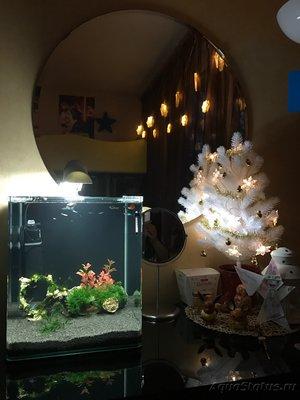 Мой нано-аквариум 30 литров kaiassowa  - IMG_5450.JPG