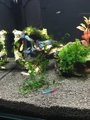Мой нано-аквариум 30 литров kaiassowa  - IMG_5592.JPG