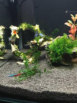 Мой нано-аквариум 30 литров kaiassowa  - IMG_5593.JPG