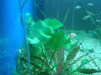 Опознание аквариумных растений - 2016-12-24 21.25.27.jpg