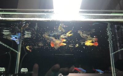 Мой нано-аквариум 30 литров kaiassowa  - IMG_5902.JPG