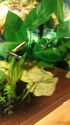 Лечить ли рыбку в аквариуме? - 20161221_231503.jpg