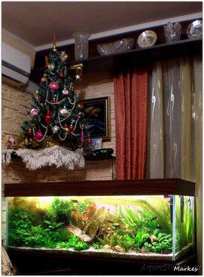 Аквариумный фотоконкурс 7 Новогоднее настроение  - P1010013.JPG