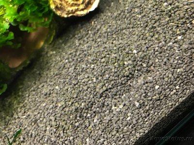 Мой нано-аквариум 30 литров kaiassowa  - IMG_6770.JPG