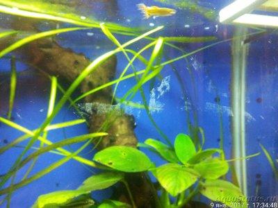 Мой настольный аквариум. Эволюция из 100 в 30 литров neldon  - 20170109_173446_IMG.jpg