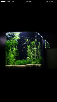 Мой нано-аквариум 30 литров kaiassowa  - IMG_6808.PNG