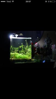 Мой нано-аквариум 30 литров kaiassowa  - IMG_6810.PNG