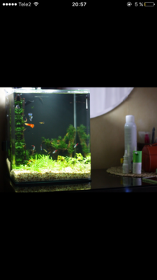 Мой нано-аквариум 30 литров kaiassowa  - IMG_6814.PNG