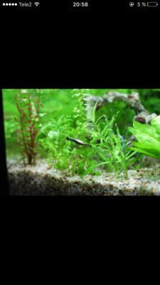 Мой нано-аквариум 30 литров kaiassowa  - IMG_6816.PNG