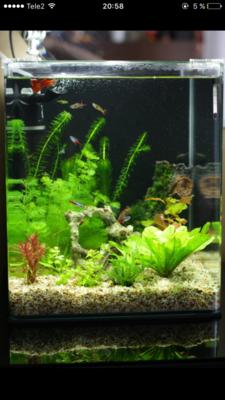Мой нано-аквариум 30 литров kaiassowa  - IMG_6818.PNG
