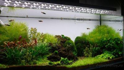 Аквариум Подводный метр 200 литров snakebig  - P1030593.JPG